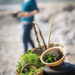Coastal Foraging